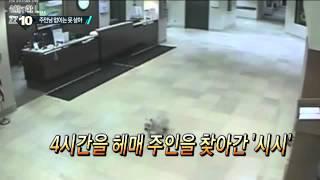getlinkyoutube.com-병원에 입원한 주인 4시간 헤매 찾아간 '반려견'_채널A_뉴스TOP10