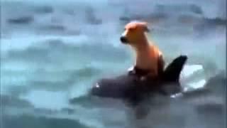 getlinkyoutube.com-دلفين ينقذ كلب سبحان الله