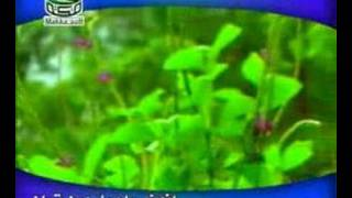 getlinkyoutube.com-cennet kuşları nasheed ilahi  Bismilrahmani arabic children