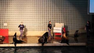 getlinkyoutube.com-The Sea Lion Show at Mystic Aquarium - The difference between a sea lion and a seal