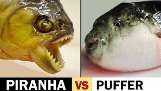 getlinkyoutube.com-Piranha Scissors vs. Puffer Fish Slicers
