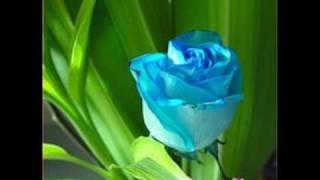 صباح اللامي بياع الورد