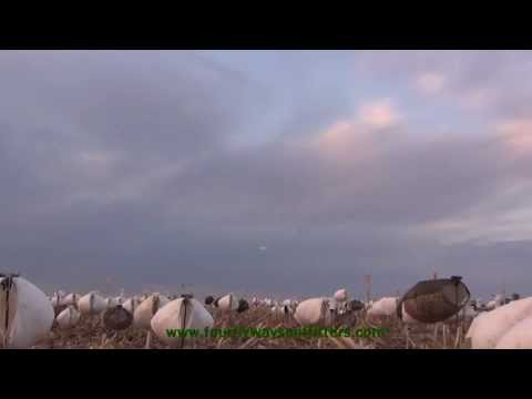 South Dakota Spring Snow Goose Hunting 2013