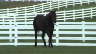 getlinkyoutube.com-These Irons Are Hot-AQHA Stallion