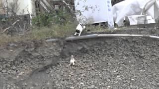 猫ママ、子猫を救う