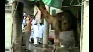 getlinkyoutube.com-camel qurbani in Gujranwala