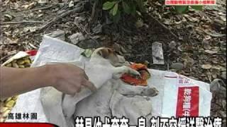 getlinkyoutube.com-【ARTTnews】高雄林園幼犬遭棒打虐待瀕死  動物救援小組志工淚奔搶救