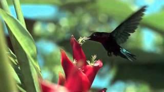 getlinkyoutube.com-The Beauty of the Nature