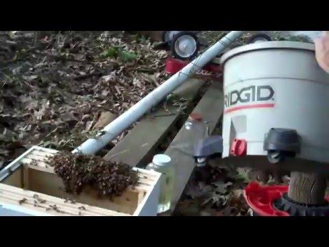 Beekeepers Makeshift Hiive