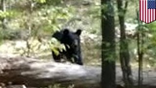 getlinkyoutube.com-Bear attacks and kills hiker: Darsh Patel photographed his killer moments before death