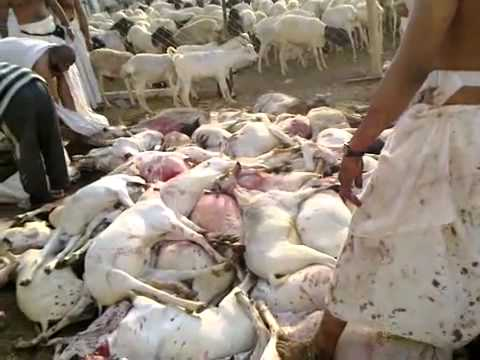 qurbani makkah From Asad Nadeem