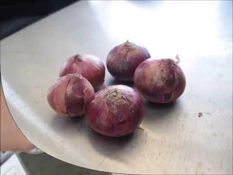 ST | Kaedah penanaman bawang merah