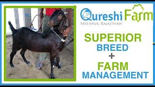 getlinkyoutube.com-Superior Goats + Good Farm Management = Successful Goat Farmer