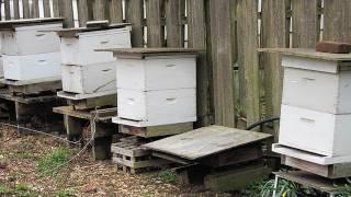 getlinkyoutube.com-Beekeeping Basics: Equipment For Beginners