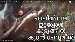 getlinkyoutube.com-Omalloor uppaman chalile Fishing Kerala Natural Fishing - Giant snake head - Vaaha Varaal