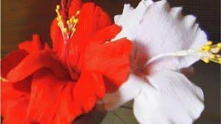 getlinkyoutube.com-How to make paper flowers - Hibiscus (Flower # 3)