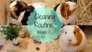 getlinkyoutube.com-Guinea Pig Cleaning Routine | November 2014