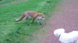 getlinkyoutube.com-Spike meets Fox