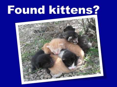 The Plight of cats and kittens in Maricopa County