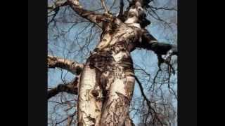 getlinkyoutube.com-60 WEIRDEST TREES in the World - Funny Unbelievable!!