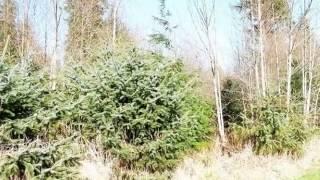 Homes for Sale - XXX Smokey Ridge Rd Onalaska WA 98570 - Greg Lund