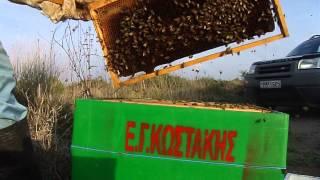 getlinkyoutube.com-Μελισσοκομία αφαιρεση πλαισιων 5 δεκ 2014
