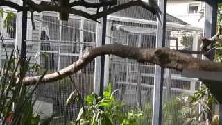 getlinkyoutube.com-Large Aviary. Walk in Aviary Overview, Construction, Plantings, Birds @ Pheasantasiam