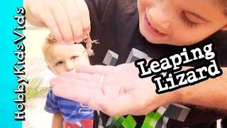 getlinkyoutube.com-HobbyPapa Surprises HobbyKids Tiny Eggs + Leaping Lizard HobbyKidsVids