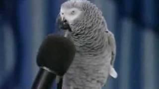 getlinkyoutube.com-O papagaio mais inteligente do mundo