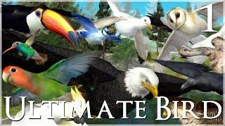 getlinkyoutube.com-Time to Fly!! • Ultimate Bird Simulator - Episode #1