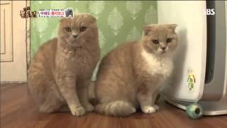 getlinkyoutube.com-동물농장 606회 #12