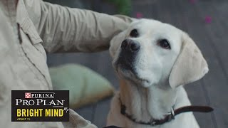 getlinkyoutube.com-When A Guide Dog Retires// Presented By BuzzFeed & Purina Pro Plan Bright Mind