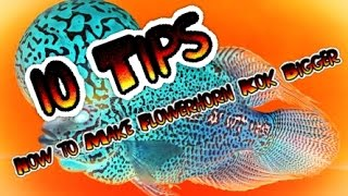 getlinkyoutube.com-10 Tips How to Make Flowerhorn Kok Bigger