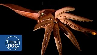 getlinkyoutube.com-Kraken Project; In search of the Giant Squid | Full Documentaries - Planet Doc Full Documentaries