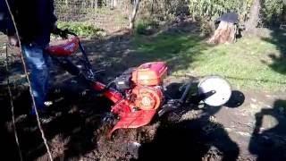 getlinkyoutube.com-Motocultor Rotakt ROG80 la lucru în grădină