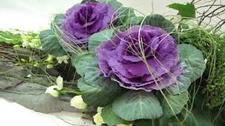 getlinkyoutube.com-Flower Arrangement,フラワーアレンジメント,arranjo de flores,插
