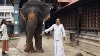 getlinkyoutube.com-Keith meets temple elephants in Kerala