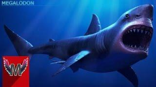 getlinkyoutube.com-4 Penampakan Hiu Megalodon Yang Terekam Kamera