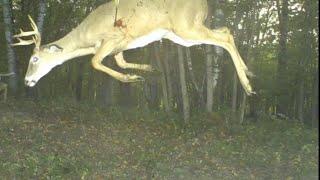 getlinkyoutube.com-Craziest Trail Cam Pictures Ever Captured