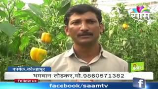 getlinkyoutube.com-Bhagwan Todkar's polyhouse capscium farming success story