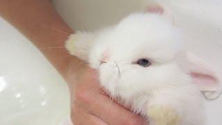 getlinkyoutube.com-Baby Bunny Takes a Bath