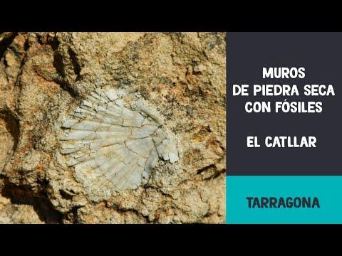 Muros de piedra seca con fósiles. El Catllar (Tarragona)
