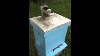 getlinkyoutube.com-How to kill Hive Beetles in a honey beehive Naturally