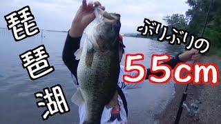 琵琶湖モンスター降臨!和邇浜で巨大ブラックバス