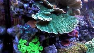 getlinkyoutube.com-SPS + LPS Aquarium 660L by Coral Reef