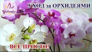getlinkyoutube.com-Орхидеи. Основные принципы правильного ухода