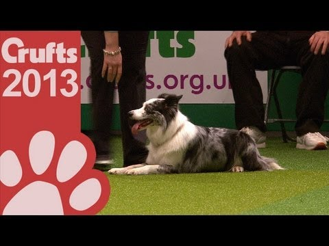 Young Kennel Club - Agility Competition - Crufts 2013