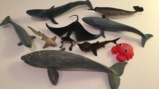 getlinkyoutube.com-Whale Toys
