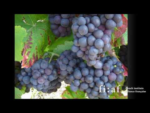 FIAF's 2010 Wine Tour de France: Champagne