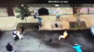 getlinkyoutube.com-闘犬の恐ろしさ